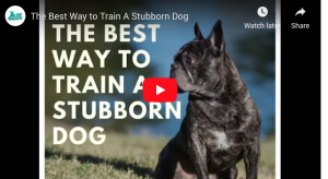 youtube video training a stubborn dog