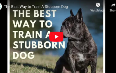 "How to Train ""Stubborn"" Dogs"