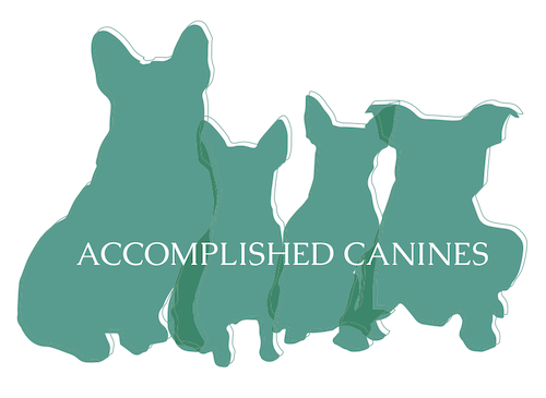 Accomplished Canines